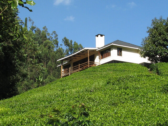 Kamakia Tea Cottages, Thika